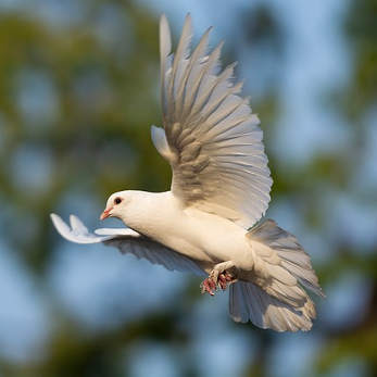 bird-3724869_347