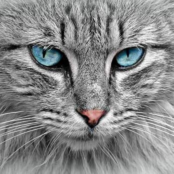 cat-1045782_347
